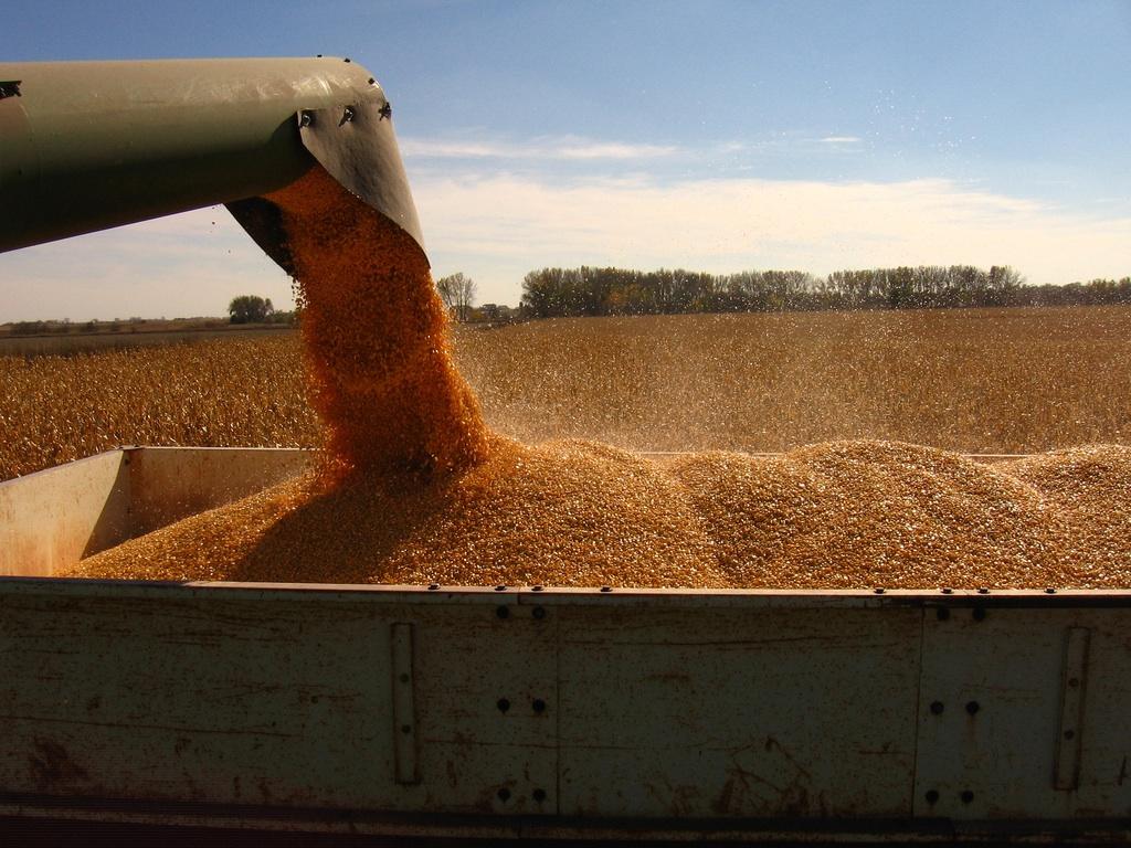 Harvest-rsgreen89