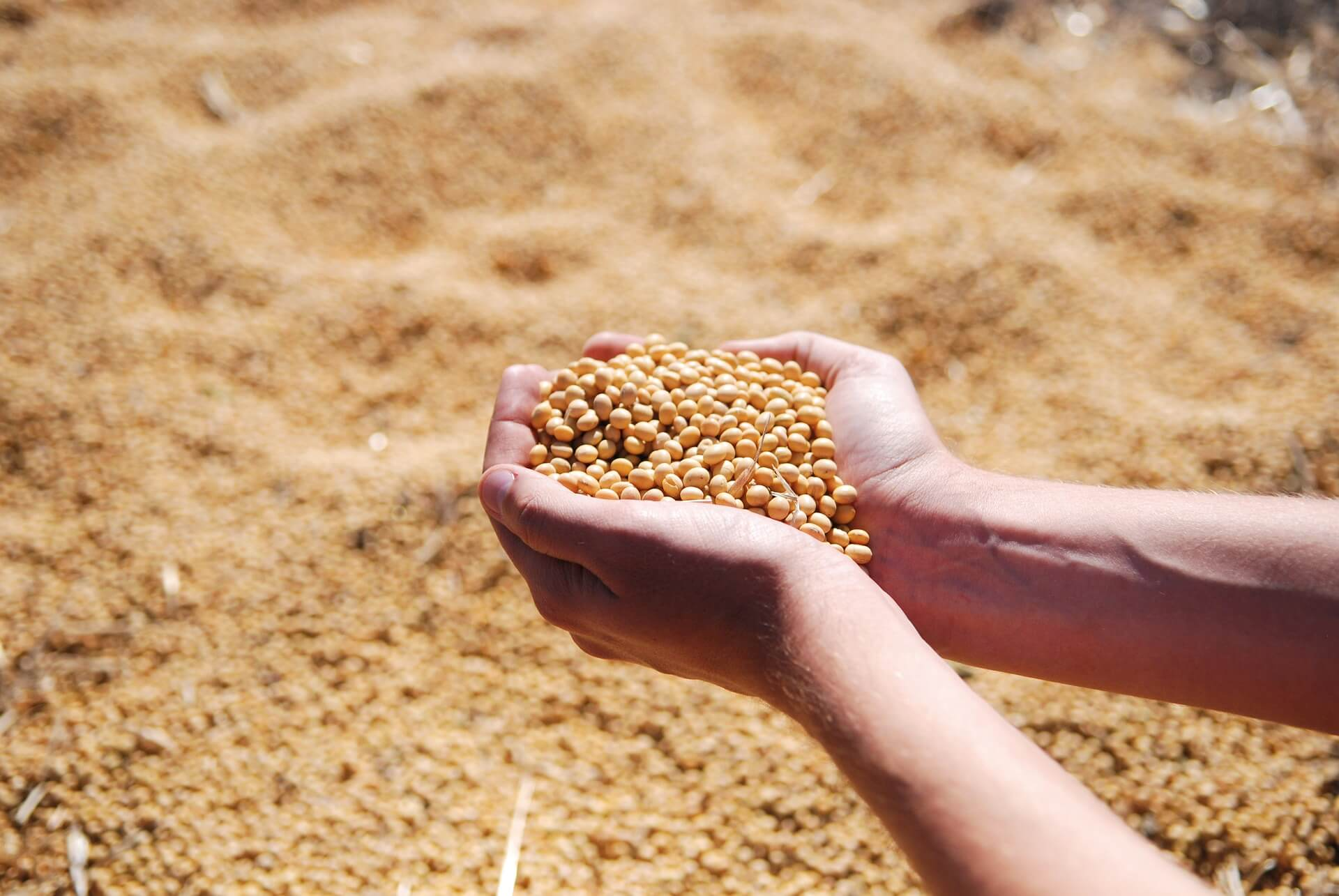 Private-soybeans-and-soybean-meal-production-estimates-show-possibly-strong-output
