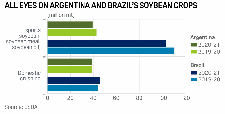 Argentine and Brazilian soybean crops