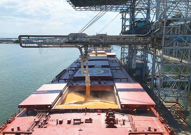 grain export quota