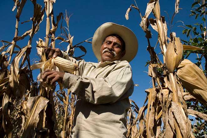 global corn production